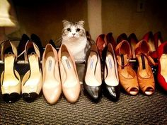 Taylor Swift's Cat Poses With Her Shoes