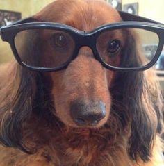 Our dog...Buddy.   Buddy Holly  <3