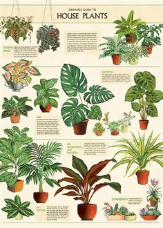 Photo Wall Collage, Picture Wall, Hanging Plants, Indoor Plants, Plant Aesthetic, Decoupage Paper, Paper Craft, Plant Design, Plant Decor