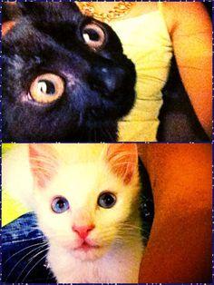 My own black cat/white cat ❤️