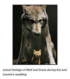 Wolf and Cress friendship Kai and Levanna's wedding Cress by Marissa Meyer The Lunar Chronicles | Via the-senpai tumblr