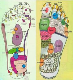 Foot Reflexology Pressure Points for massage and/or essential oils. The bottom of your feet could affect what's going on in other areas of your body. On each foot there are over nerve endings called reflexes that correspond to every organ and system Onion In Sock, Reflexology Massage, Foot Reflexology Chart, Reflexology Treatment, Essential Oils For Add, Acupressure Points, Natural Health Remedies, Natural Cures, Herbal Remedies