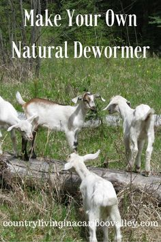 Deworm your livestock starting in spring. Keep your animals healthy. All natural dewormer recipe!