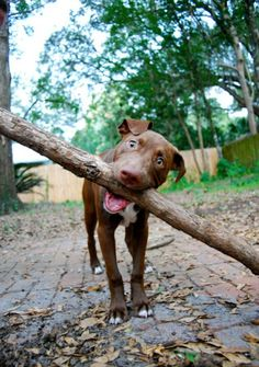 puppy and stick