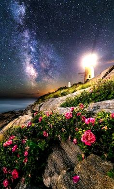 The Roses of Pemaquid Point by: Jon Secord