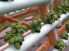 vertical-hydroponic-system-6