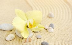 Download wallpapers yellow orchid, yellow leaf, sand, spa, stones, seashells