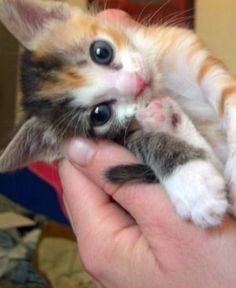 The More loving Cat Kittens TOP 10  Video Kittens Compilation 2015 MORE VIDEOS HERE https://www.youtube.com/watch?v=InDJc2L_5dA&list=PLC_HjotBFMpNqd0u6cYK0NtHBXcOIEEoD   SUBSCRIBE: http://www.youtube.com/user/TheFederic777?sub_confirmation=1   #Kittens #Cats #CuteKittens