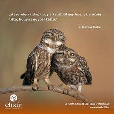 Hamvas Béla gondolata a szerelem és a barátság közti különbségről. A kép forrása: Elixír Könyvesbolt