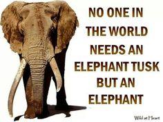 Elephants need protecting!