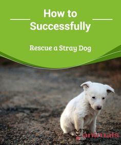 How Can You Rescue a Stray Dog?  In most countries, a stray dog, or a few, are common due to people's irresponsibility amongst other things. It should be noted that more and more people and groups are organizing to fix this problem.