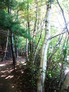 Walden Pond...one of best walks I have ever taken...