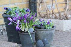 Godastunder &Tokiga Ideèr: Våren är här.....