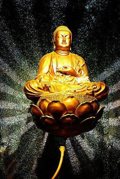 LOTUS.......PARTAGE OF BUDDHISM - PATH TO PEACE.....ON FACEBOOK........