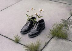 And everything is going fine, Brooke DiDonato