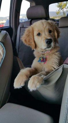 ~ BE SURE TO KEEP YOUR PUPPY/DOG SAFE IN A MOVING CAR, DOGGIE SEAT BELTS ARE AVAILABLE ON AMAZON.COM & PETSMART.COM, NEVER LEAVE AN ANIMAL IN A CAR ALONE ESPECIALLY WHEN WARM/HOT OUTSIDE.  THEY CAN DIE QUICKLY ~