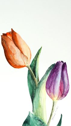 Tulip Watercolor, Watercolor Flowers Tutorial, Tulip Painting, Watercolor Art Lessons, Watercolor Paintings For Beginners, Watercolor Techniques, Purple Tulips, Guache, Drawing