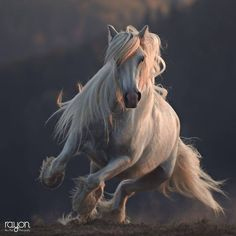 Beautiful photo of our Angelina taken by Rayon Photography ♥ - Schönheit - Pferde Most Beautiful Horses, Pretty Horses, Horse Love, Baby Horses, Horses And Dogs, Andalusian Horse, Friesian Horse, Beautiful Creatures, Animals Beautiful