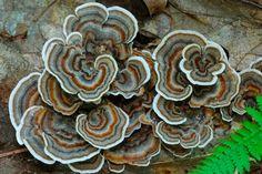 10 Beautiful Photos of Wild Edible Mushrooms   The Nosh   Food   KCET