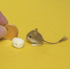 14 best kangaroo mouse