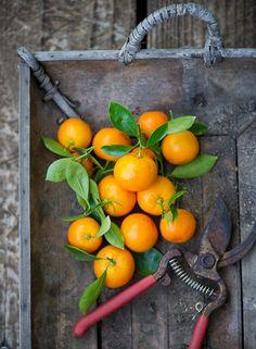 Kalamansi limes or Calamondin Oranges are small tart and fragrant citrus fruit. Story on @whiteonrice