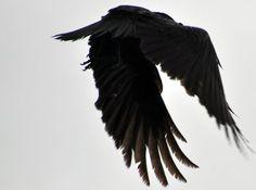 the-l-o-o-k-b-o-o-k: |⚜ Corvus Corax | Rachid H| B & W | monochromatic | lookbook