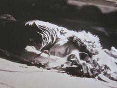 忌野清志郎 ロックン・ロール・ショー 日本武道館 Love&Peace パンフレット:宇宙 世田谷 emam