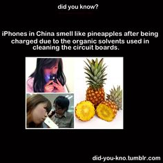japanese iphones smell like pineapples...who knew.
