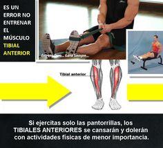 Asegúrate de entrenar el músculo tibial anterior. Muchos no lo hacen. #culturismo #musculacion #bodybuilding #musculos #ejercicios #entrenamiento #gym #gimnasio #bodybuilder