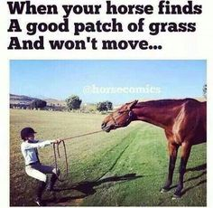 f77b4f414c062c649330218269c3e621?noindex=1 16 funniest horse memes in the barn cat memes, 16 and cats,Funny Barn Memes