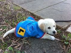 Guide dogs poo on command. | 22 Awesome Things You Didn't Know About Your Dog