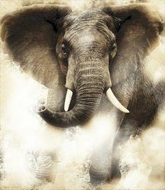 Bull Elephant - Charging Bull by Elephant Love, Elephant Art, African Elephant, Alabama Elephant, Baby Elephants, Elephant Tattoos, African Animals, Crimson Tide Football, Alabama Football
