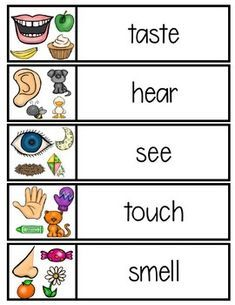 5 senses word cards by Five Senses Preschool, Emotions Preschool, My Five Senses, Senses Activities, Preschool Learning Activities, Preschool Themes, Preschool Classroom, Kindergarten, Learning English For Kids