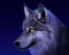 Wolf Pictures - Wild Wolf