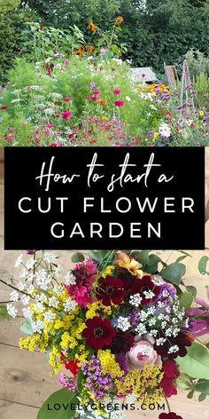 Tips on growing a cut flower garden from gardener and florist Helena Willcocks. Includes how to lay out your garden, amending soil, and flowers to grow. Growing Flowers, Growing Plants, Cut Flowers, Planting Flowers, How To Plant Flowers, Cosmos Flowers, Flower Plants, Cactus Flower, Growing Vegetables