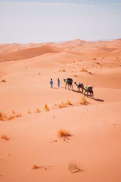 Camel trekking through the desert of Morocco - Chegaga sand dunes