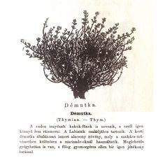 demutka