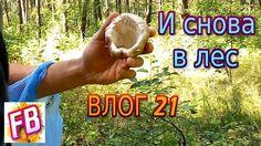 ВЛОГ 21 В лес за грибами Нас напугали ужи