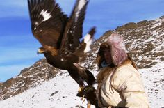 Khazak Mongolian Altai mountains Falconry, Hunting Golden eagle Vs Fox - Human Planet - BBC