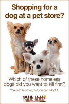 Every time someone buys a puppy or kitten at a shop- thats one less homeless shelter dog that never finds a forever home.  Thats one more puppy or kitten to be replaced by puppy mills and disreputable breeders. stop the cycle. don't shop. ADOPT!