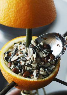 Tee tyhjistä appelsiiniin puolikkaista koristeellinen ruokintalauta pihapiirin linnuille. Katso Viherpihan ohjeet ja aloita lintujen talviruokinta!