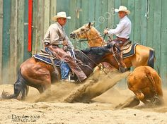 Turns & Stops - Cutting horses - Canon Digital Photography Forums