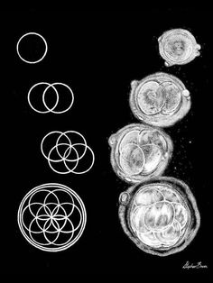Flower of life. Cell division. Sacred geometry