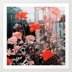 Jardín de Rosas © Erika Ibaceta © *Blogger . Facebook . Instagram . Tumblr @erikaibaceta  Fotografía tomada en: Comuna de Maipú, Santiago, Chile.