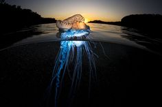 A shock of Blue Photo by Matthew Smith - 2016 National Geographic Nature…