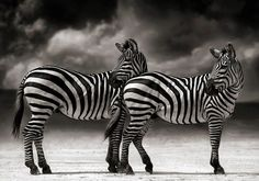 Nick Brandt's photography