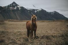 "Icelandic horse. - make sure to follow me on <a href=""https://instagram.com/michielpieters/"">Instagram</a> | <a href=""http://www.michielpieters.com"">Website</a> | <a href=""https://www.facebook.com/michielpietersphoto"">Facebook</a>"