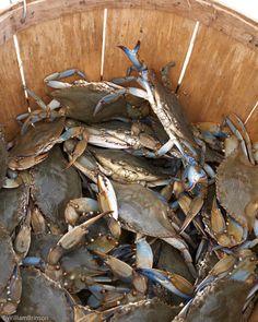 crabs.. yummmmm