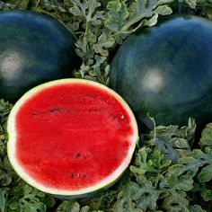 Deliciously juicy watermelon with great contrasting colors! Winter Melon, Drip Irrigation System, Clay Soil, Juicy Fruit, Summer Picnic, Flower Seeds, Colorful Interiors, Container Gardening, Garden Plants