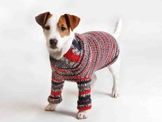 Sweater for dogs. (Instructions only Finnish) Knitting Projects, Knitting Patterns, Dog Sweaters, Pullover, Catio, Pet Accessories, Dog Friends, I Love Dogs, Pet Birds